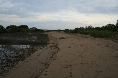 King Island 030