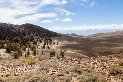 Looking back at the road coming into the Bristle Cone Pine grove