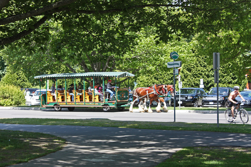 Horse-drawn trolley, Stanley Park