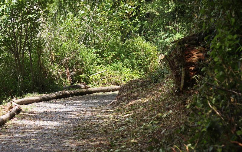 Path, Inland Lake