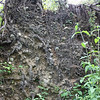 Upended tree root mass