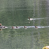 Female merganser, with ducklings - Lost Lake.  The single duck approaching from the right is a male merganser.