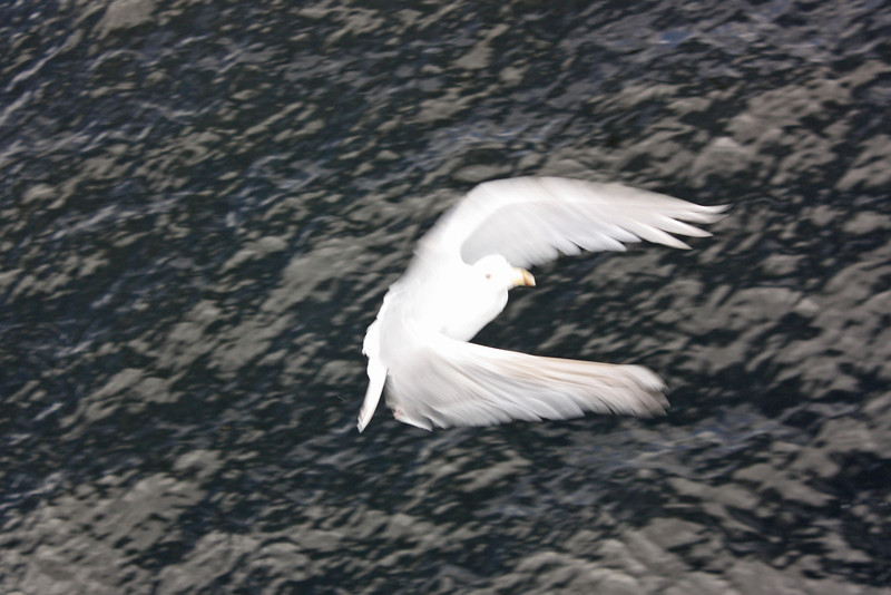 Gull, while leaving Langdale
