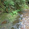 Creek, Cliff Gilker Park, Roberts Creek, BC