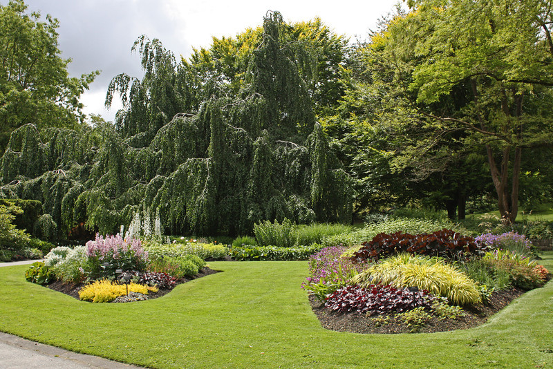 Bedding plants and a big willow.