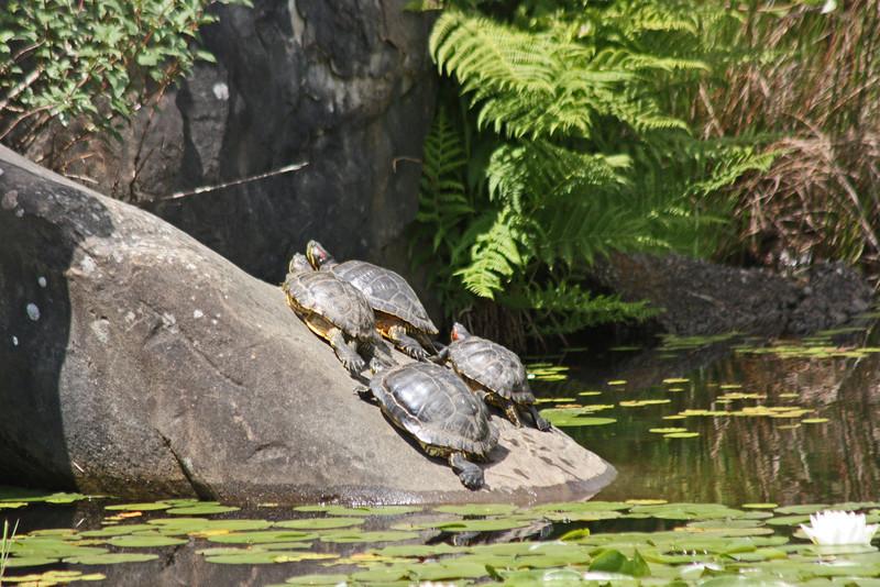 Livingstone Lake, turtles