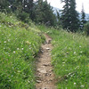 Marmot in the trail