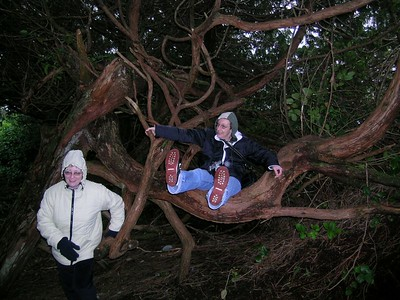 Lynne and Carol in an Arbutus tree