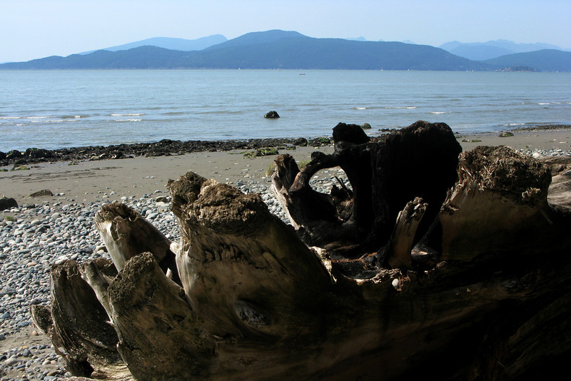 Lots of driftwood in these parts. We also saw bald eagles in the trees atop the cliff.