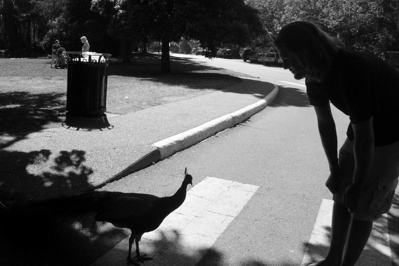Hey, Mr. Peacock...tell your mother I said hi!