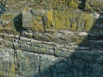 The RSPB reserve sea cliffs with many the nesting birds