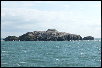 Our first view of Grassholm just off the Pembrokeshire coast
