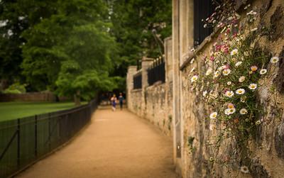 """Along """"Dead Man's Walk"""", Oxford"""