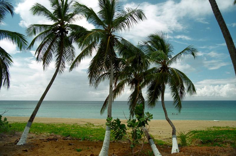 Palm trees - Elizabeth Beach, Tortola