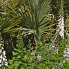 Foxgloves and palmettos
