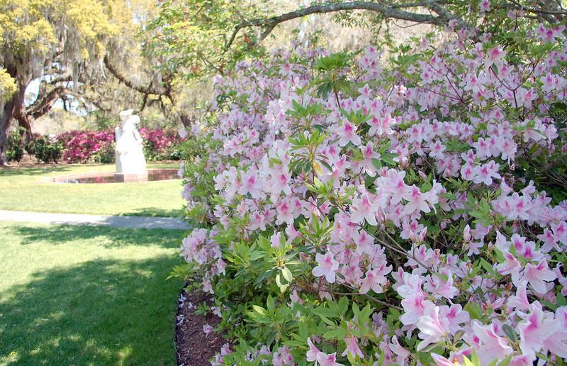 Perimeter of azalea garden