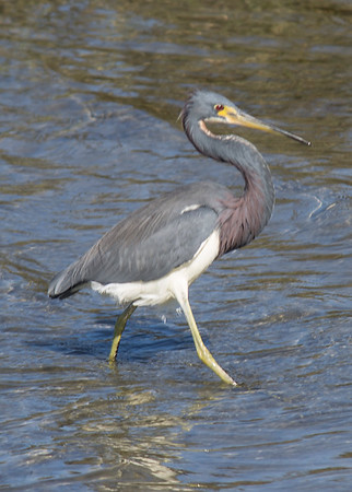 Bird Nature Walks