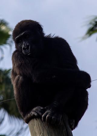 Gladys Porter Zoo