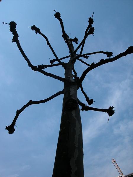 Strange tree...