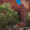 Burr Trail ~ Slot Canyon ~ Entering