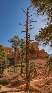 Red Canyon ~ Stark Tree w/Interesting Colorations