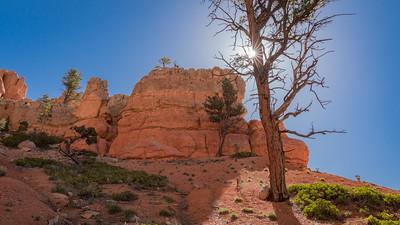 Red Canyon ~ Starburst