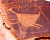 petroglyph MV _MG_9645