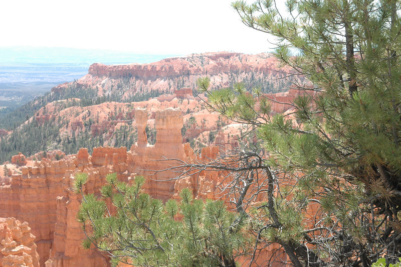 Bryce Canyon National Park<br /> Rim Trail<br /> U for Utah