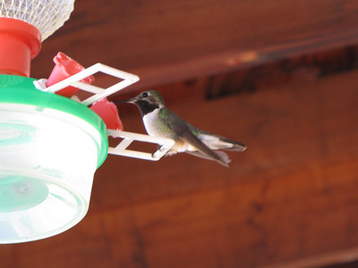 hummingbird at the train depot