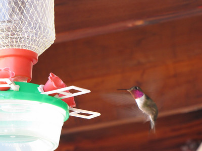 Hummingbird at railway depot