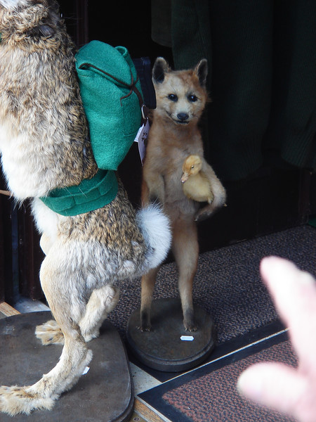 Rosie really wanted to buy this FOX