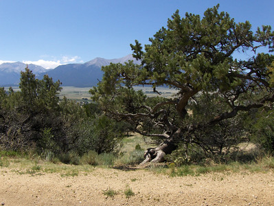 2007 - views of the Buena Vista area - this is one of my favorites - with the leaning tree