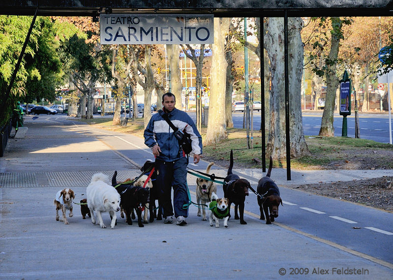 Dog walker, Palermo district