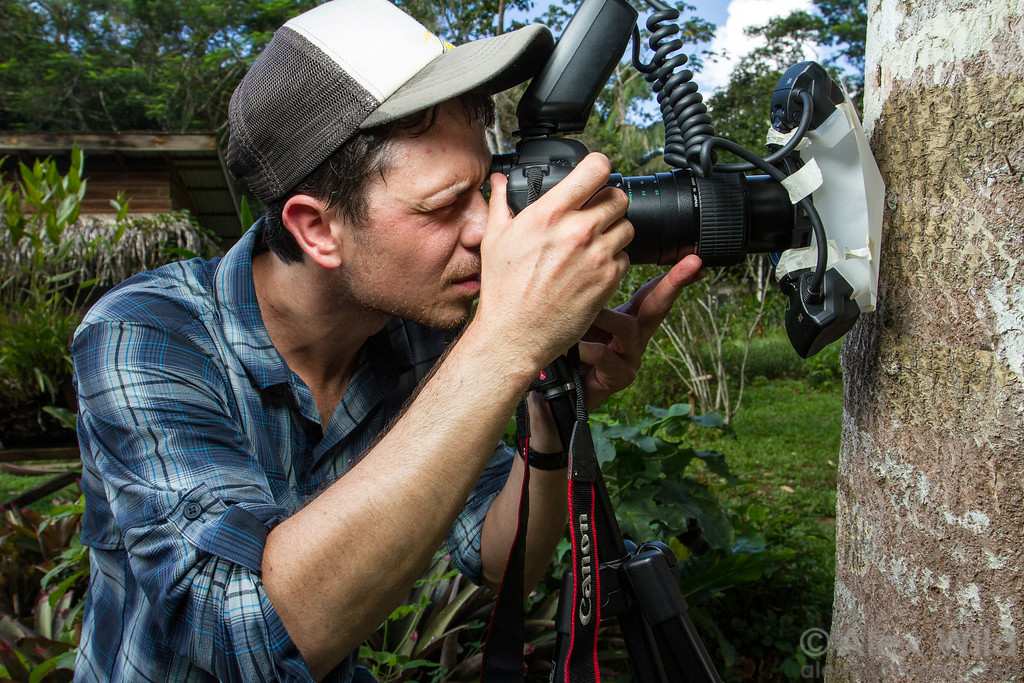 A BugShot participant lines up a photograph of a bark mantis.