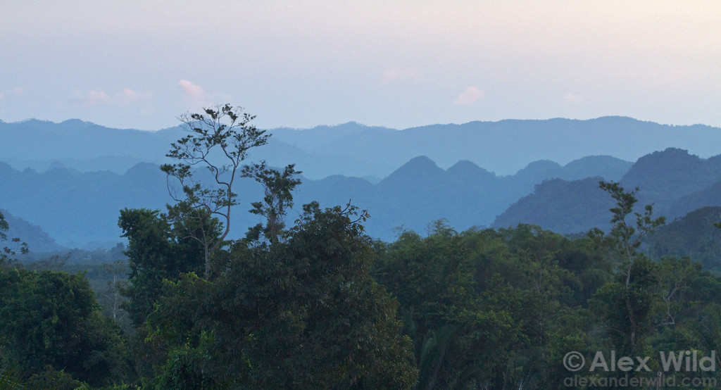 The karst limestone formations of the region mean a distinctly craggy topography and endless caves, some of which we'll visit to photograph unique cave invertebrates.  This is the view from a Caves Branch Tree House at dusk.