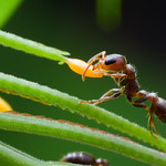 BugShot Belize aspires to teach more than just photographic technique. We also aim to provide a basic foundation in tropical ecology. With a sense of context for the local insects, you'll be ...