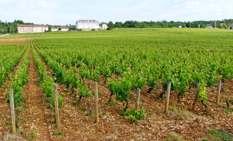 A chateau within a vineyard in the Burgundy Region.