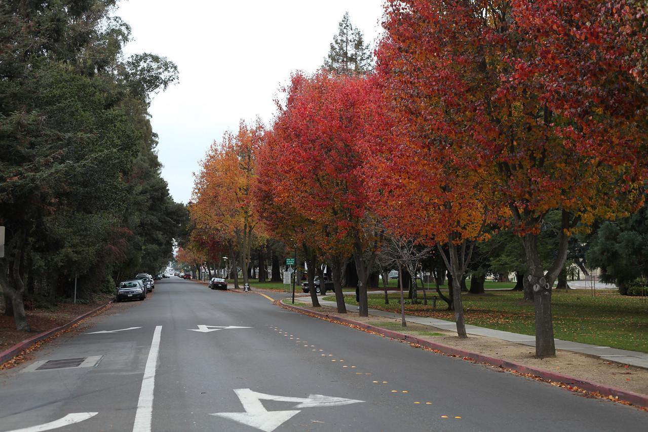 Pretty fall colours.