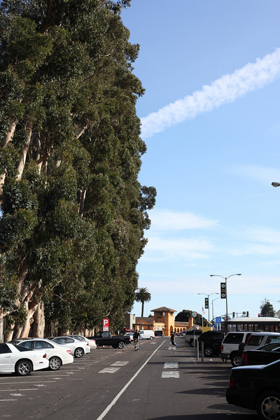Tall gums along the Caltrain line at Burlingame.