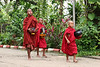 Young monks returning from gathing food alms