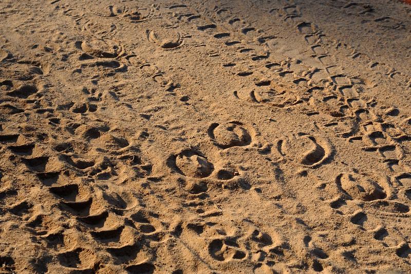 Pony trap tracks