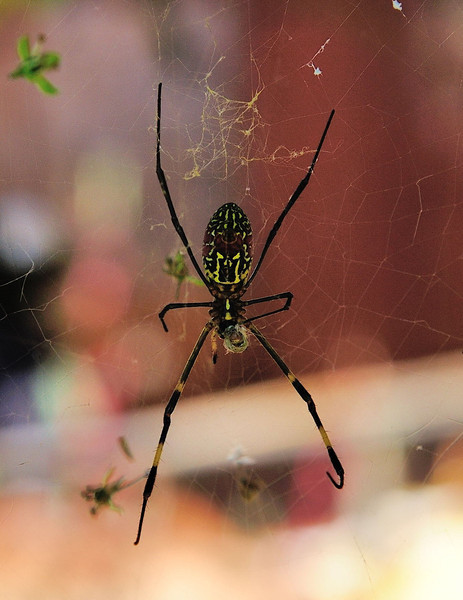 A colourful arachnid in a village on the way to Kakku