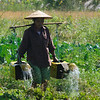Watering the vegetables in a village just to north-east of Maymyo