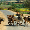 A bullock cart crossing