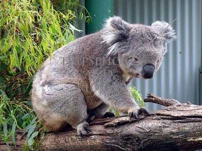 Burnie, Australia