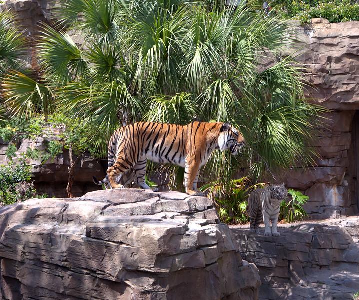 Busch Gardens Tampa, Spring 2011