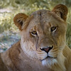 """Busch Gardens Florida <a href=""""http://wklein.smugmug.com/Travel/Busch-Gardens"""">http://wklein.smugmug.com/Travel/Busch-Gardens</a>"""