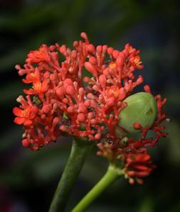 Butterflies-Gainesville_FL