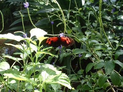 2006 (Butterfly Pavillion)
