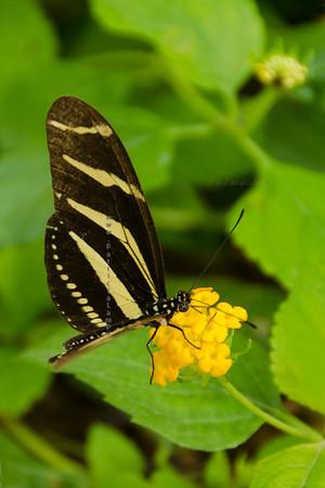 butterfly brown_  yellow flower Nikon  3721
